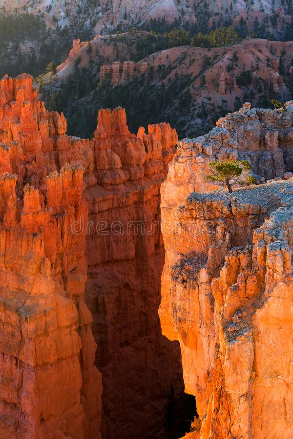 View of stunning red sandstone hoodoos in Bryce Canyon National royalty free stock photography