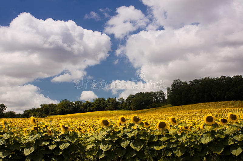 Scenic view on summer agricultural landscape stock photo