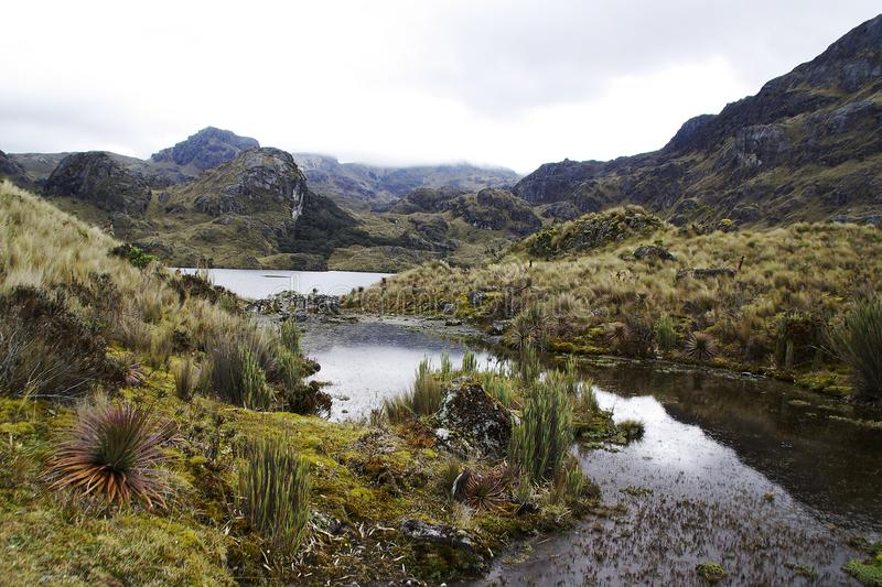 El cajas national parc in ecuador stock photos
