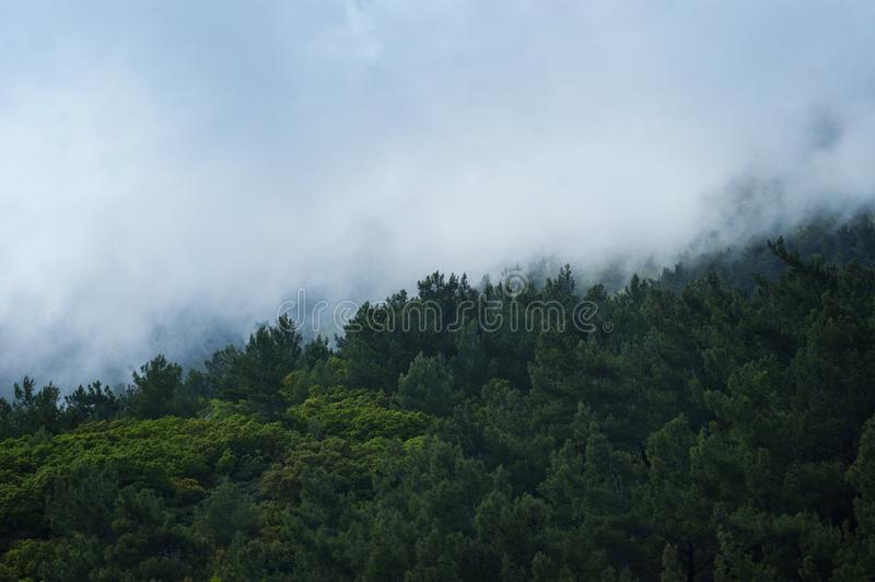 Scenic View of Trees Surrounded by Fog royalty free stock images