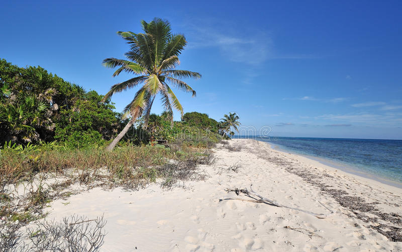 Scenic view of tropical beach