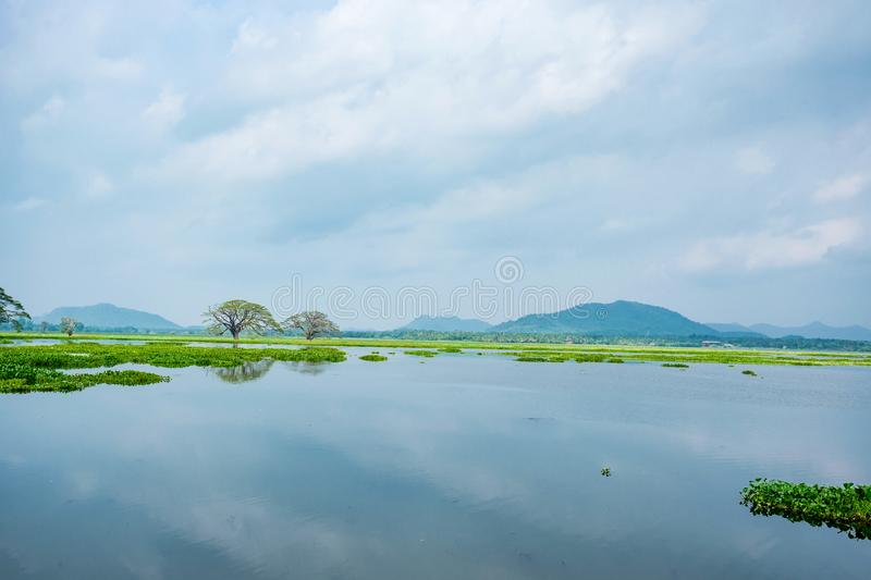 Scenic view of tropical lake with trees in water. Beautiful tropical landscape of Tissa Wewa lake with giant Indian rain trees or Albizia saman in the water stock images