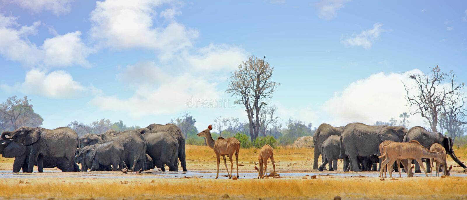 Scenic view of a vibrant waterhole with Kudu and elephants at a waterhole with a cloudy blue sky in Hwange stock images