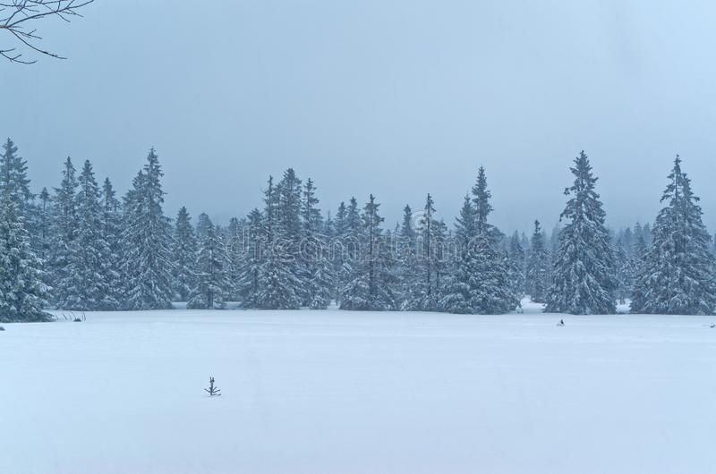 Scenic view of a winter landscape with a forest in background. Scenic view of a winter landscape In Harz national park, Germany stock photography
