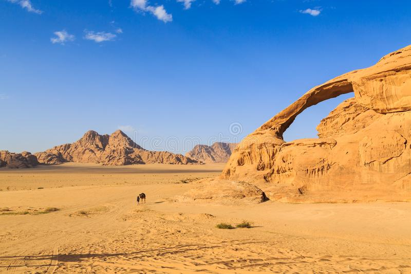 Scenic view of the yellow colored arch rock in the Wadi rum desert in Jordan with man and camel walking through royalty free stock photo