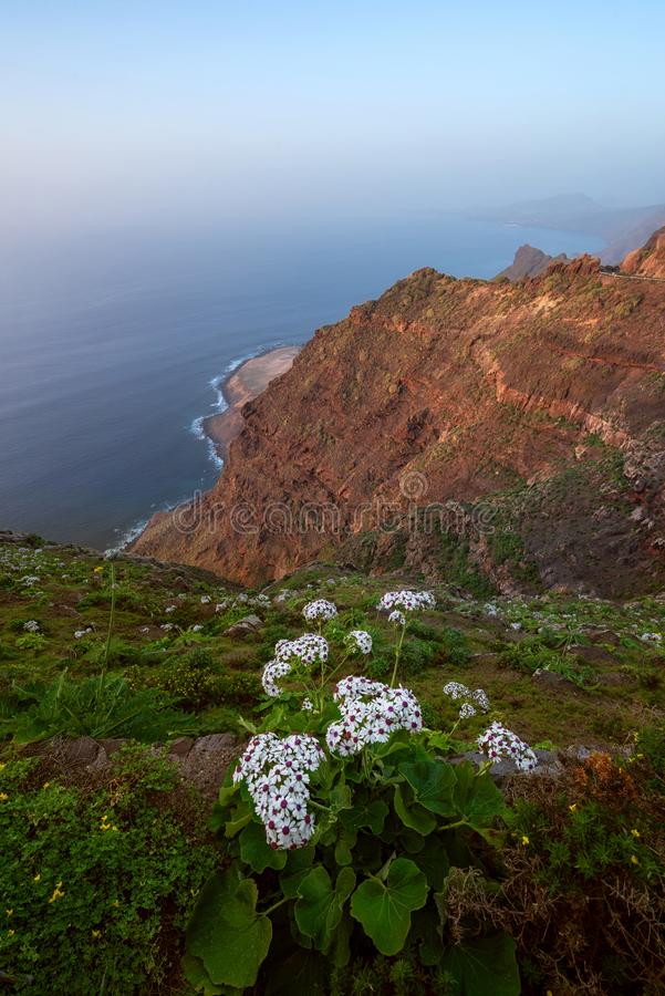 Scenic volcanic coastline landscape, Cliffs in Tamadaba natural park, Grand Canary island, Spain. stock images