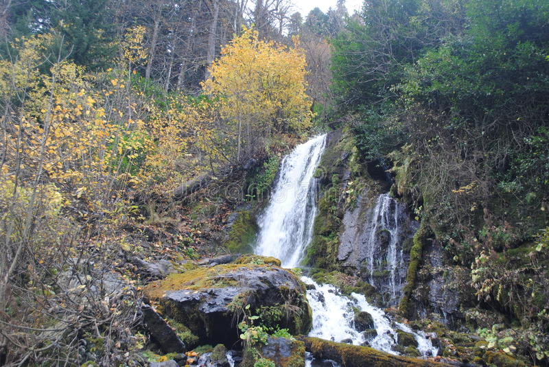 Scenic waterfall in the forest royalty free stock photos