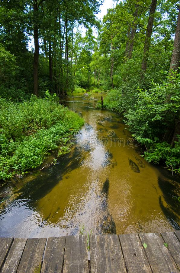 Sopot river in Roztocze region of Poland. A scenic wide angle view of a shallow river of Sopot running through green forest of Roztocze region in southern Poland royalty free stock image