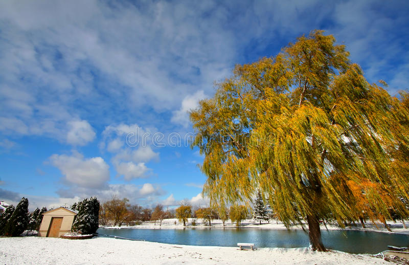 Download Scenic winter landscape stock photo. Image of grass, country - 12843226