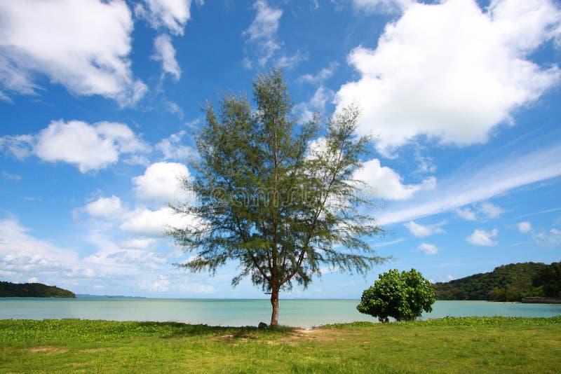 Scenics Baum, Perspektivewolke lizenzfreies stockfoto