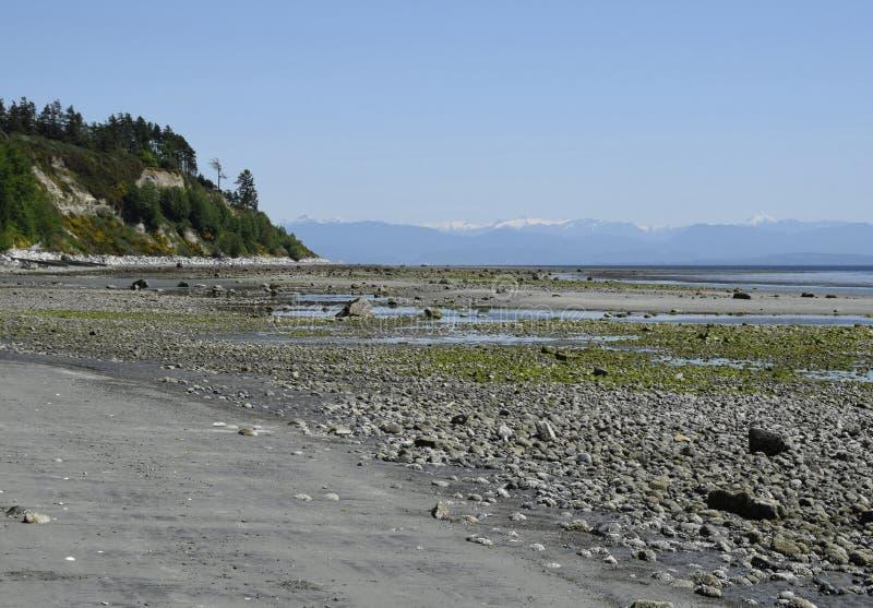 Scenics de rivage de parc de broche d'oie image stock