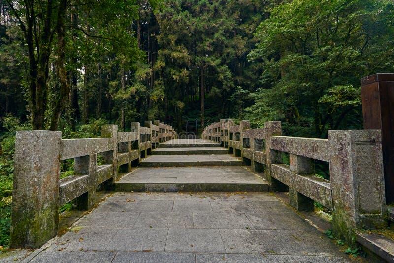 Scenics hermoso del puente largo del cemento del paso con el bosque verde imponente fotografía de archivo
