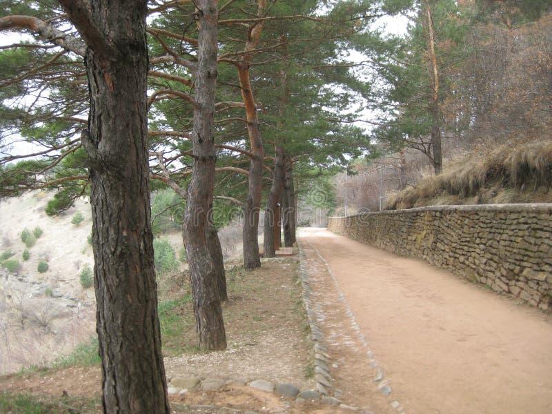 Sceniczna ścieżka w parku Kislovodsk Na lewej stronie ślad r wysokie nikłe sosny i na wyprostowywa ściennego robić s, obrazy stock