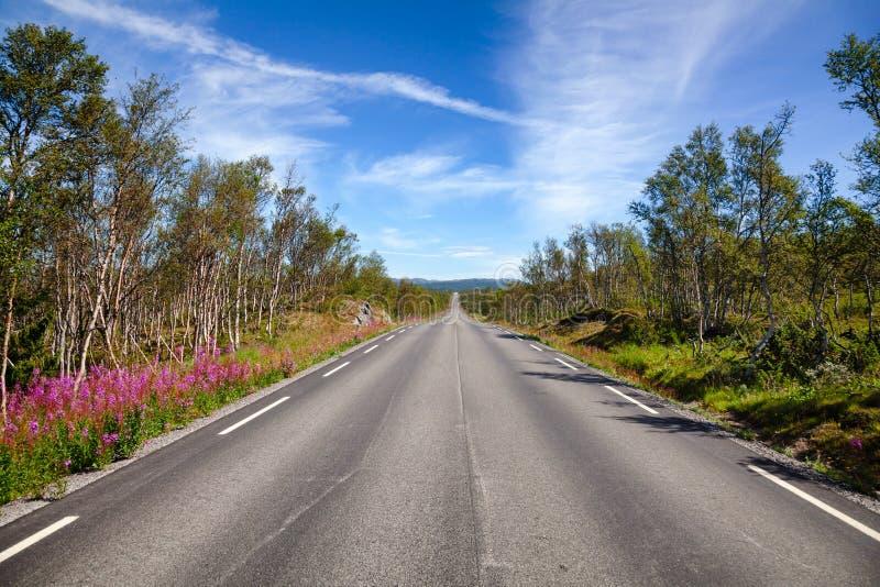 Sceniczna halna droga w Telemark Południowy Norwegia obraz royalty free