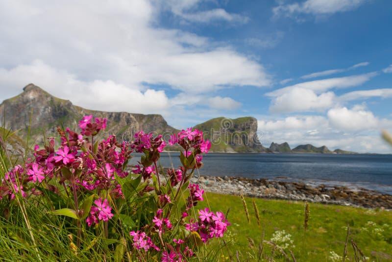 Sceniczna plaża na Lofoten wyspach fotografia stock