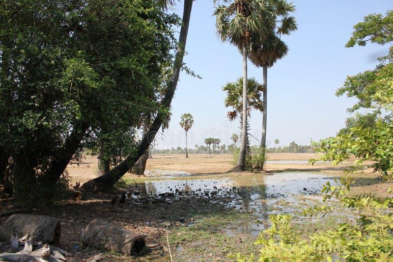Sceniczna wieś w Khmer lecie obraz stock