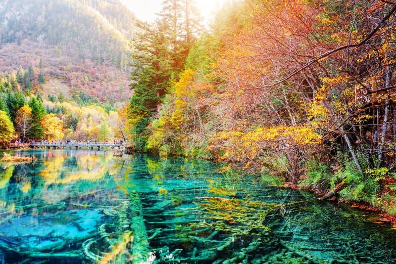 Sceniczni zanurzający drzewni bagażniki w wodzie Pięć Kwiat jezioro obrazy stock