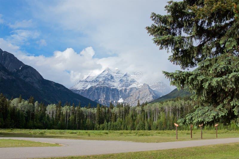 Sceniczny śniegu szczyt Robson góra i sosna las w lecie obraz royalty free