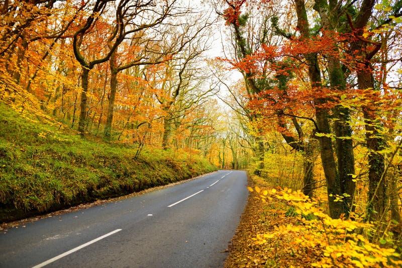 Sceniczny drogowy cewienie przez jesień lasu Dartmoor park narodowy, szeroki moorland w okręgu administracyjnym Devon, w południo fotografia stock