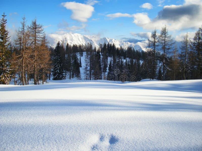Sceniczny halny zima krajobraz z odciskami stopy zakrywającymi z świeżym śniegiem zdjęcia stock