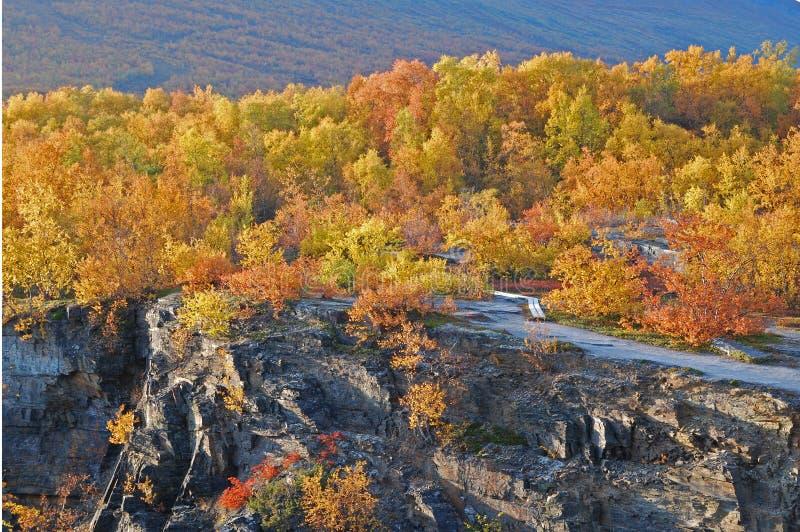 sceniczny jesień las obraz stock