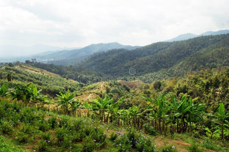 Sceniczny krajobraz na drzewkach palmowych i górach zdjęcia stock