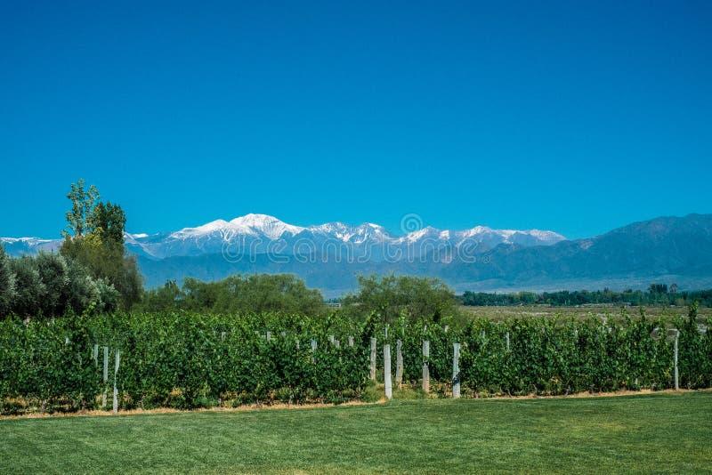 Sceniczny krajobraz z Andes górami z śniegiem dalej i winnicą obraz royalty free