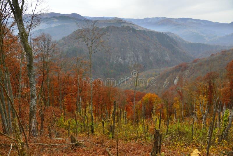 Sceniczny krajobraz z górami i jesień lasem fotografia stock