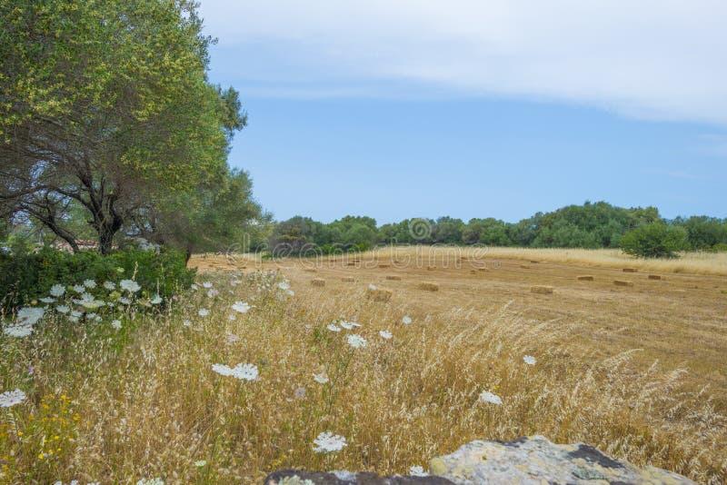 Sceniczny krajobraz zieleni wzgórza i skaliste góry wyspa Sardinia zdjęcia royalty free