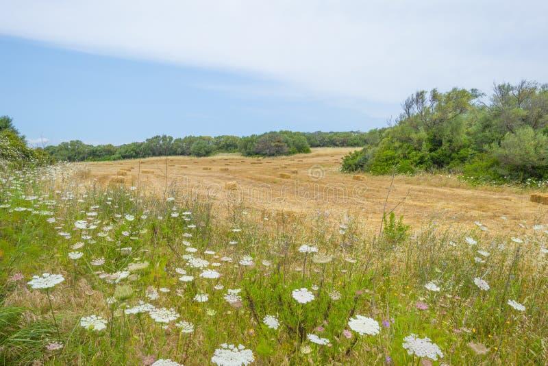 Sceniczny krajobraz zieleni wzgórza i skaliste góry wyspa Sardinia zdjęcie stock