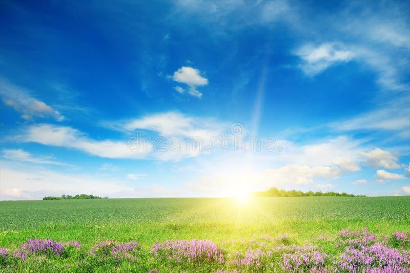 Sceniczny krajobraz zielony pszeniczny pole i niebieskie niebo fotografia stock