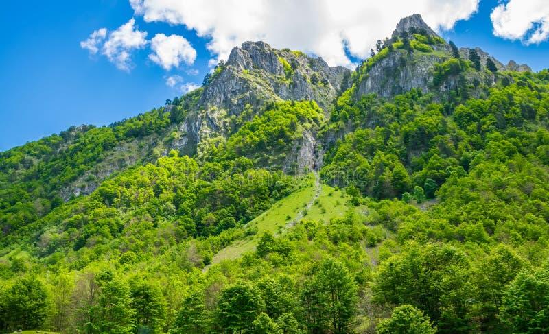 Sceniczny las i łąki wśród nakrywać gór obrazy royalty free