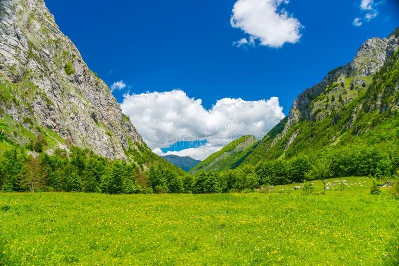Sceniczny las i łąki wśród nakrywać gór zdjęcia royalty free