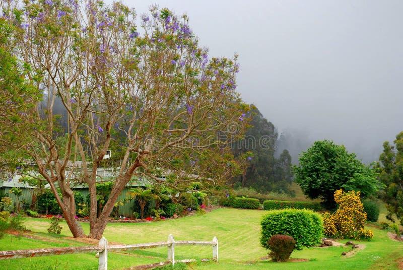 Sceniczny Maui - Jacaranda drzewa obrazy stock