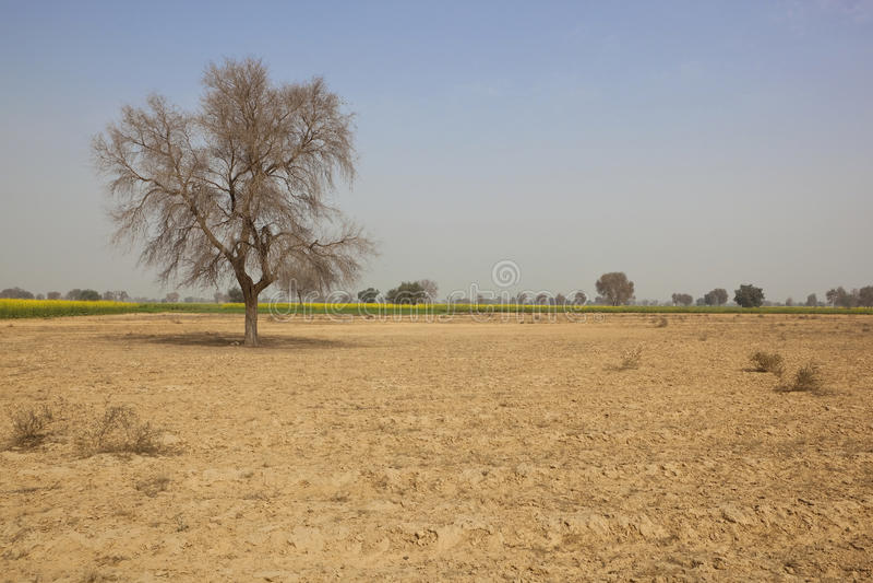 Sceniczny Rajasthan obrazy stock