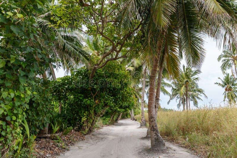sceniczny widok drzewka palmowe wzdłuż pustej ścieżki, zdjęcie stock