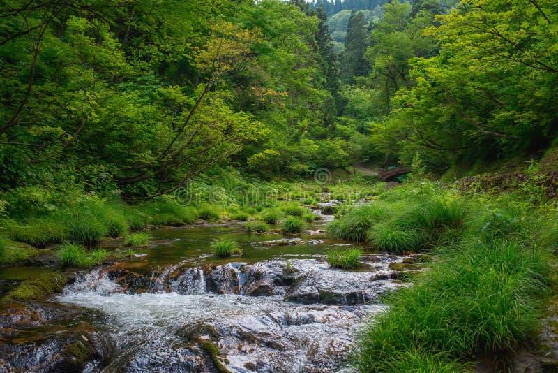 Sceniczny widok halna rzeka w północy Japonia zdjęcie stock