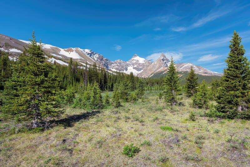 Sceniczny widok od Icefield parkway na Skalistych górach w Banff parku narodowym, Alberta Kanada obraz royalty free