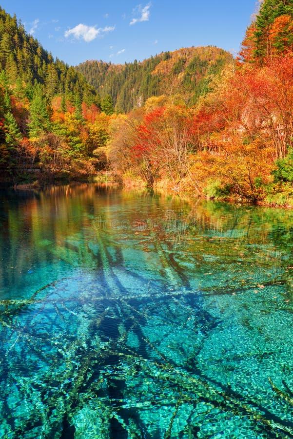 Sceniczny widok Pięć Kwiat Jeziorny Stubarwny jezioro obraz royalty free