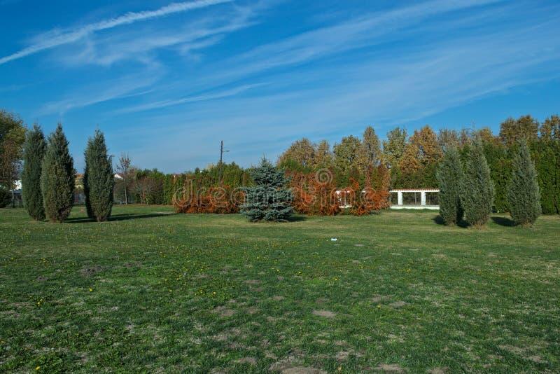 Sceniczny widok pole z choinką, dennym buckthorn i pelengów drzewami, zdjęcie stock