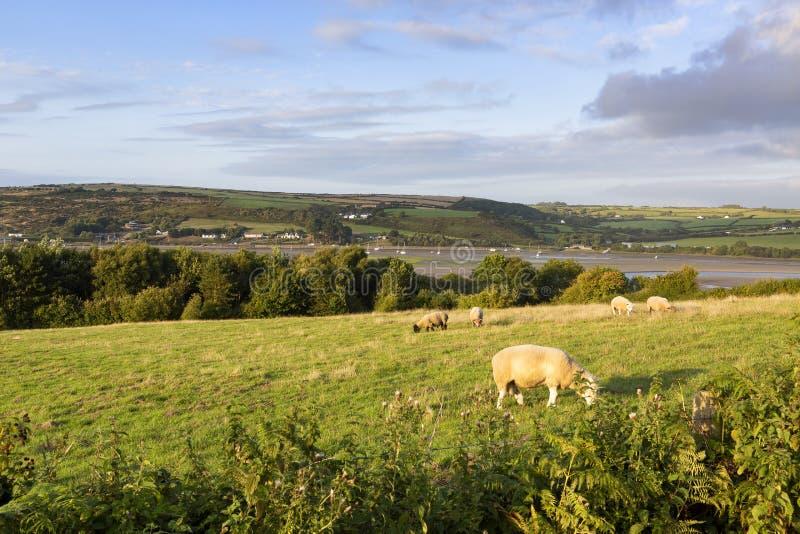 Sceniczny widok rzeczny Teifi, Walia, UK fotografia stock