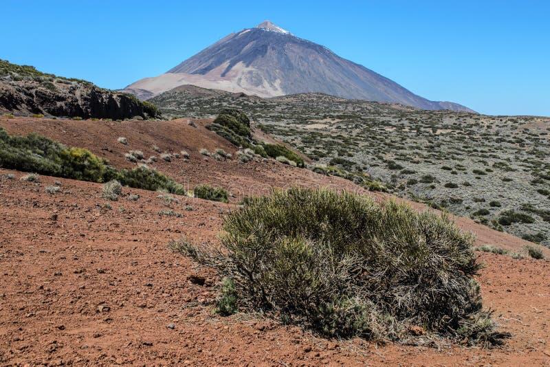 Sceniczny widok skalisty krajobraz Teide w Teide parku narodowym i góra obraz stock