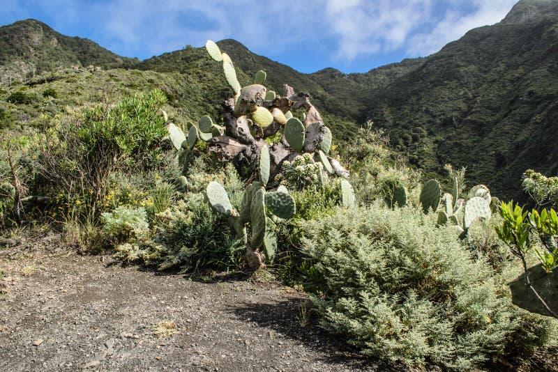 Sceniczny widok skalisty krajobraz w anaga wiejskim parku, Tenerife obraz royalty free