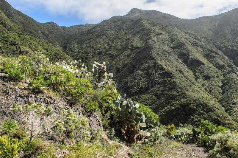 Sceniczny widok skalisty krajobraz w anaga wiejskim parku, Tenerife zdjęcia stock