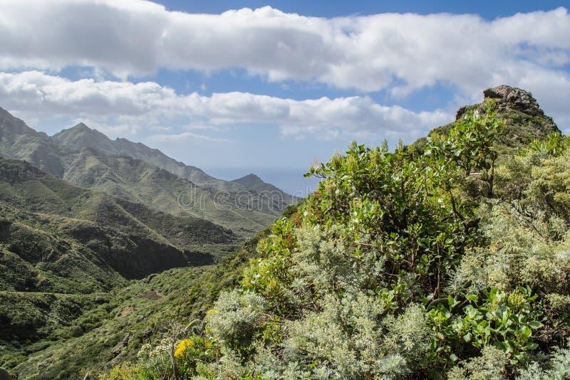 Sceniczny widok skalisty krajobraz w anaga wiejskim parku, Tenerife zdjęcia royalty free