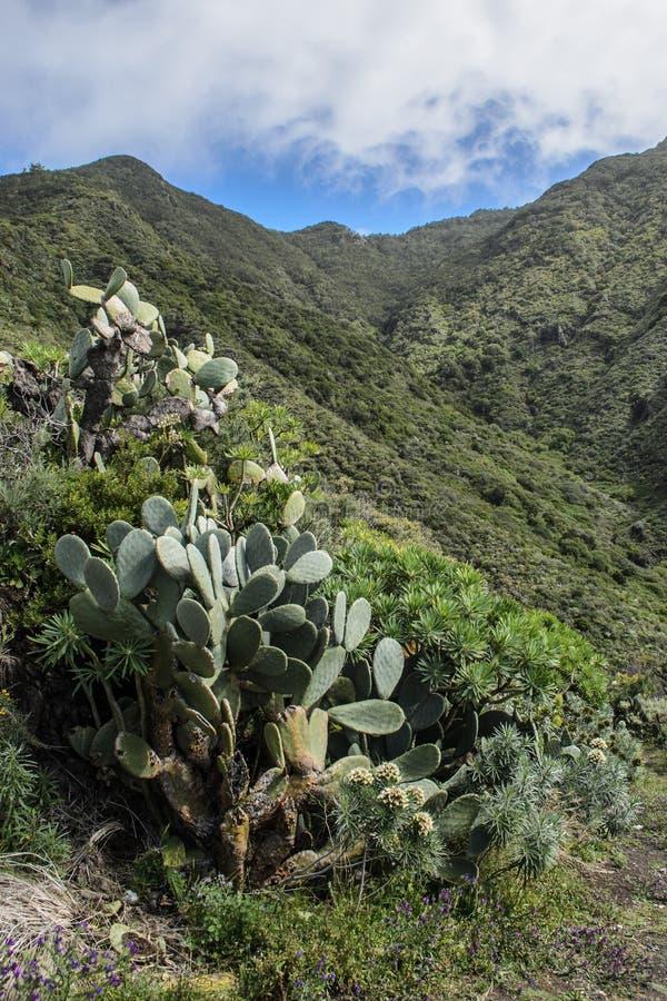 Sceniczny widok skalisty krajobraz w anaga wiejskim parku, Tenerife zdjęcie royalty free