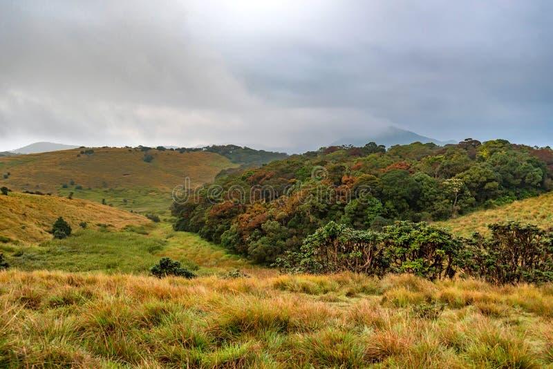 Sceniczny widok w Horton równinach, Sri Lanka obrazy stock