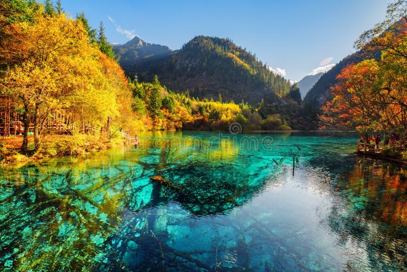 Sceniczny widok zanurzający drzewni bagażniki w Pięć Kwiat jeziorze fotografia royalty free