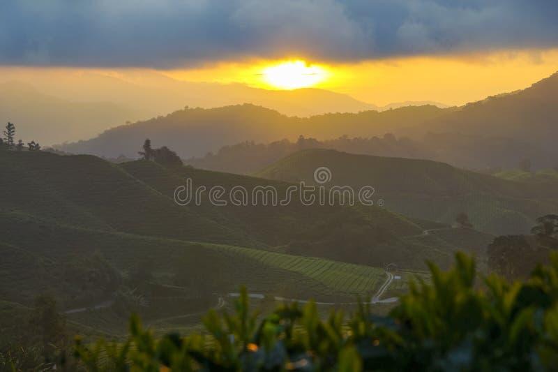 Sceniczny wschód słońca przy herbacianej plantacji doliną zdjęcia royalty free