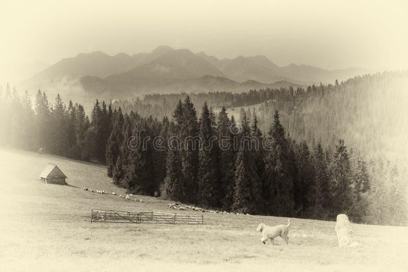 Scenisch beeld van de Hoge Tatras met een herdershond op het grasland royalty-vrije stock foto's